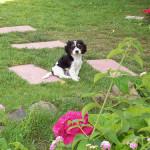 Bottolo nel giardino del Bed and breakfast Phocea, San Teodoro
